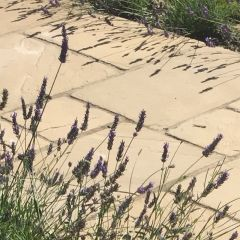 National Trust Barrington Flagstones