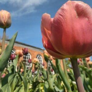 Dunham Massey in Spring