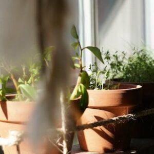 May Gardening Tips